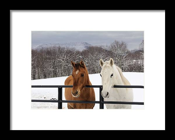 Snow Framed Print featuring the photograph Visiting by Carolyn Postelwait