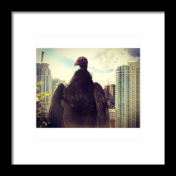 Building Framed Print featuring the photograph Vulture Perched On A High Rise Building by Juan Silva