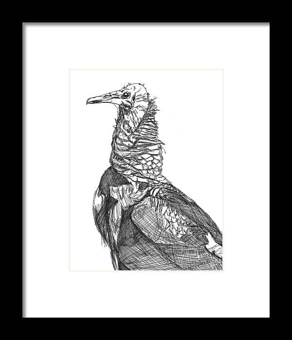 Beauty Framed Print featuring the drawing Vulture Sketch by Katie Ree