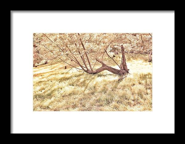Trees Framed Print featuring the photograph W Is For The Woods by Samuel Emole