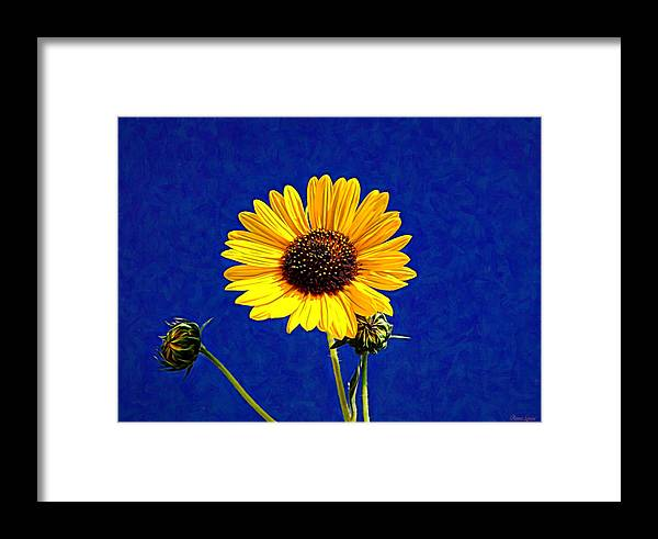 Sunflower Framed Print featuring the photograph Wabi-sabi Sunflower by Anna Louise