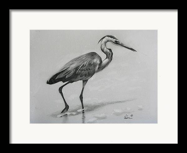Graphite On Paper Framed Print featuring the drawing Wader by Michael Vires
