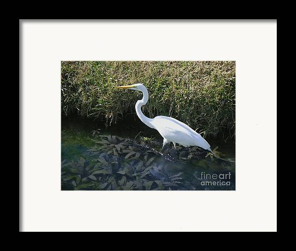 Nature Framed Print featuring the photograph Wading For Dinner by Lucyna A M Green