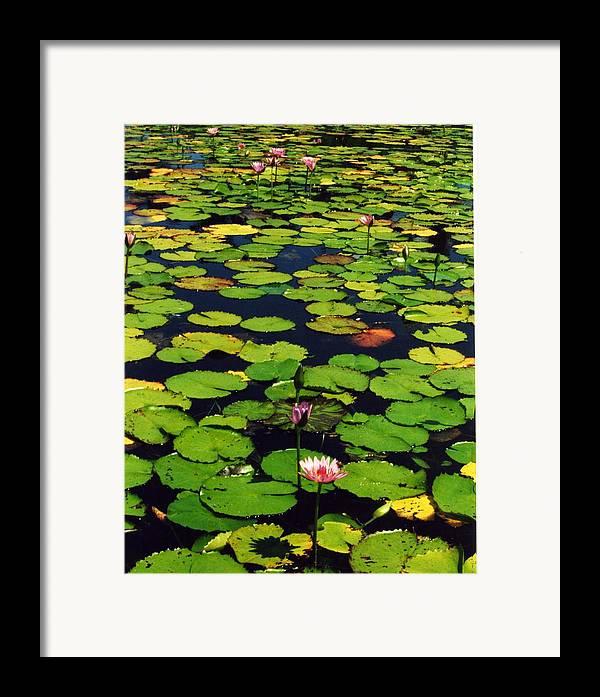 Water Lilies Water Framed Print featuring the photograph Wailea Water Lilies by Jennifer Ott