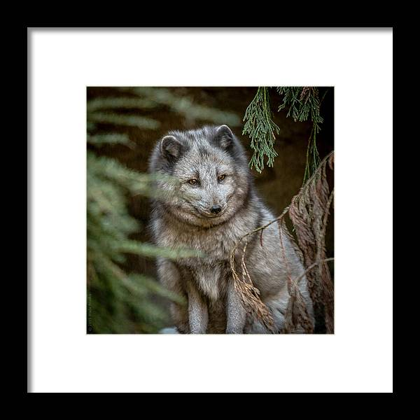 Nc Zoo Framed Print featuring the photograph Waiting For Red by Wade Brooks