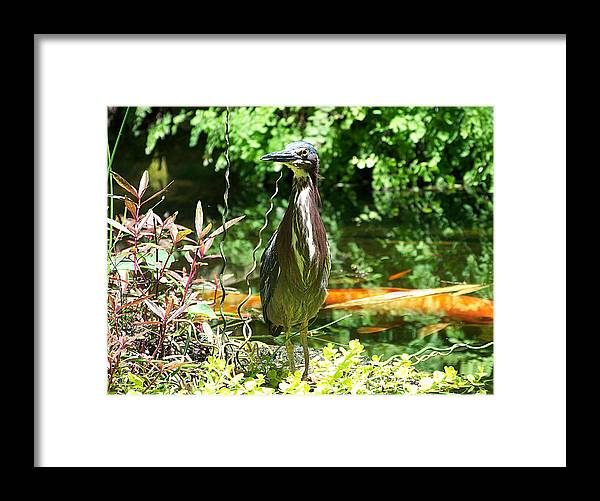 Birds Framed Print featuring the photograph Waiting For The Small Ones by Amanda Vouglas