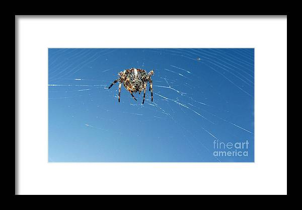 Spider Framed Print featuring the photograph Waiting by Larry Keahey