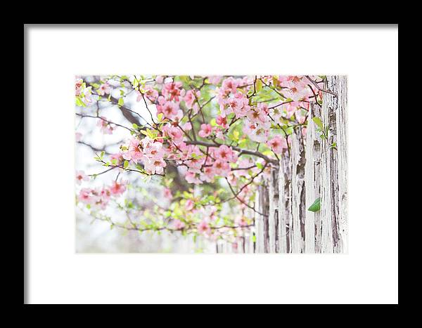 Flowers Framed Print featuring the photograph Walk In The Neighborhood by Toni Hopper