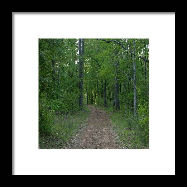 Walk Framed Print featuring the photograph Walk In The Woods by Carla Fionnagain