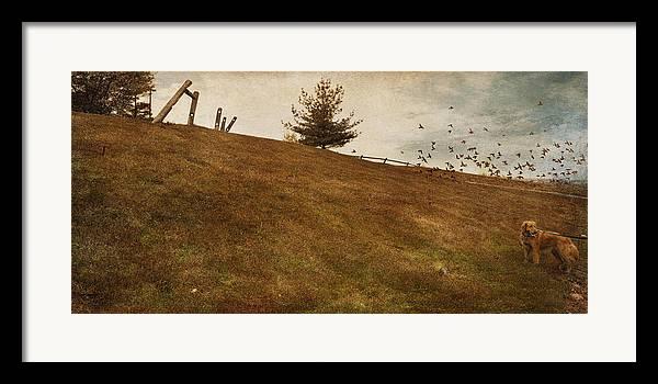 Birds Framed Print featuring the photograph Walk by Inesa Kayuta