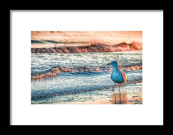 Ocean Framed Print featuring the photograph Walking On Sunshine by Mathias Janke