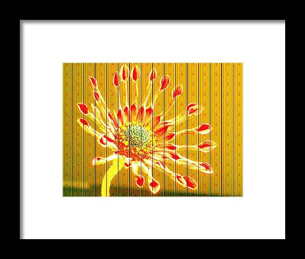 Flower Framed Print featuring the photograph Wall Flower by Tim Allen