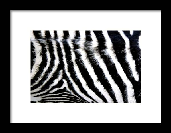 Photographer Framed Print featuring the photograph Wall Rug by Jez C Self