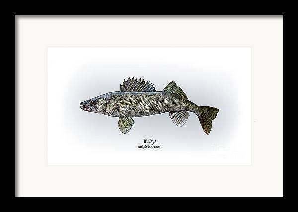 Walleye Framed Print featuring the painting Walleye by Ralph Martens