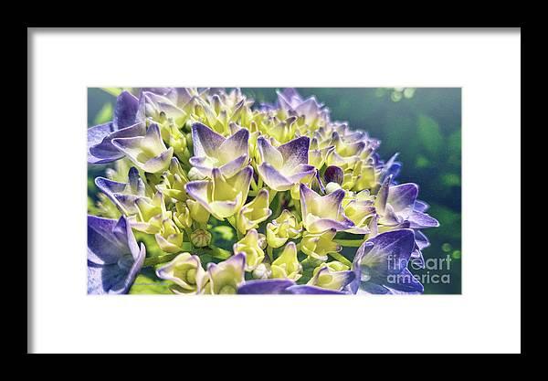Blue Framed Print featuring the photograph Warm Blues by Jean OKeeffe Macro Abundance Art