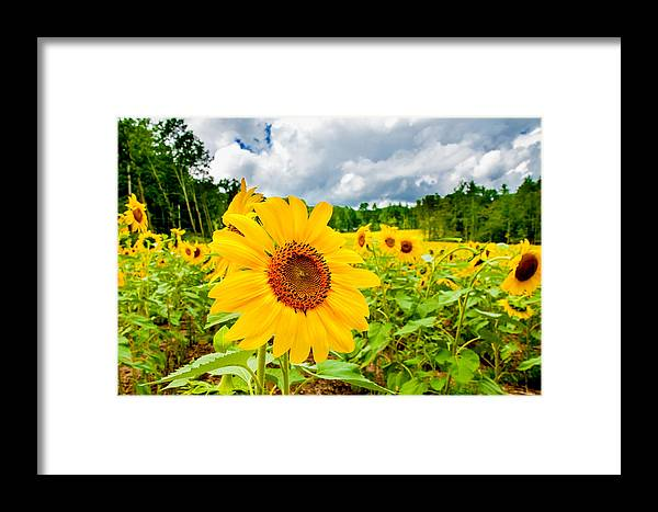 Lee Framed Print featuring the photograph Warm Glow by Greg Fortier
