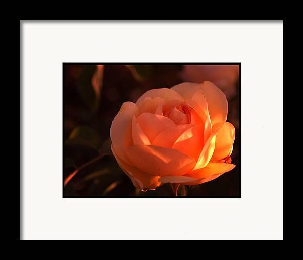 Flowers Framed Print featuring the photograph Warm Sun by Richard Gordon