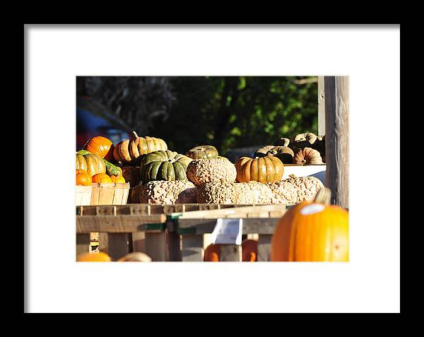 Still Life Framed Print featuring the photograph Wart Pumpkins by Jan Amiss Photography