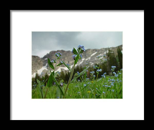 Purple Flower Framed Print featuring the photograph Wasatch Luster by Derek Nielsen
