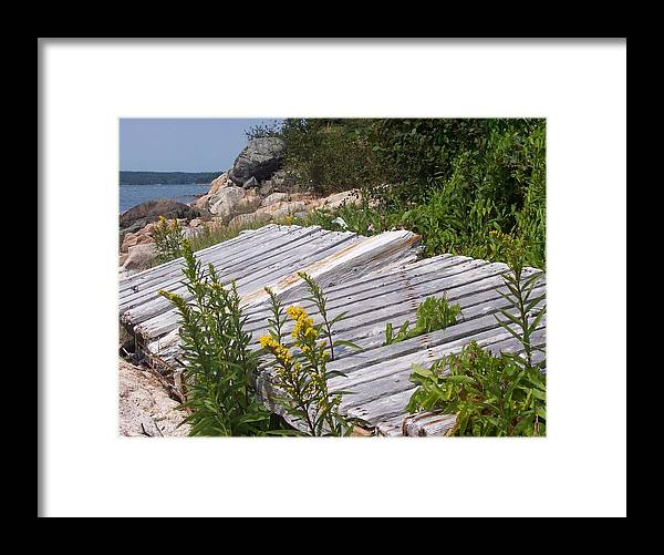 Nature Framed Print featuring the photograph Washed Ashore by Lisa Kane