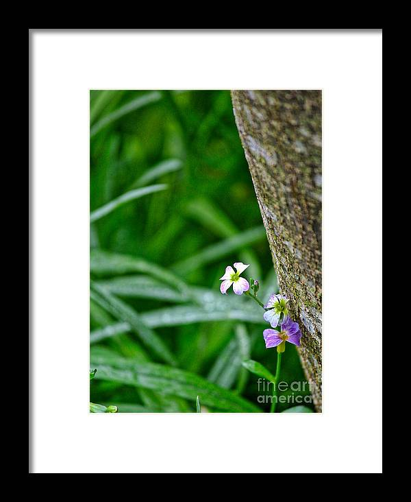 Wildflower Framed Print featuring the photograph Watch For Fae Folk by Karin Everhart