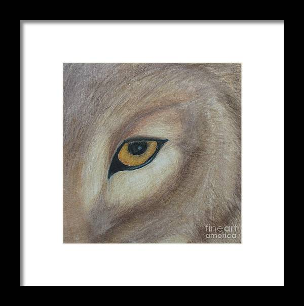 Wolf Framed Print featuring the drawing Watcher by Juli House