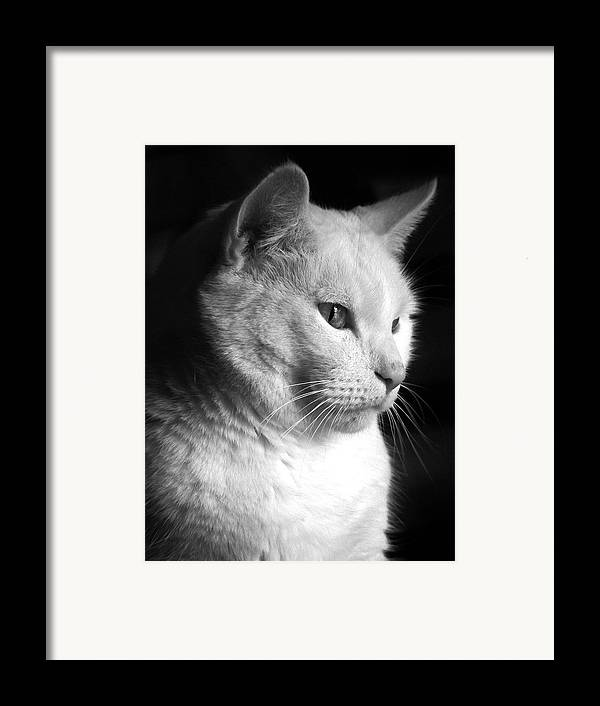 Nature Framed Print featuring the photograph Watchful by Bob Orsillo