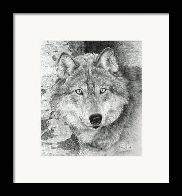 Pencil Framed Print featuring the drawing Watchful Eyes by Carla Kurt