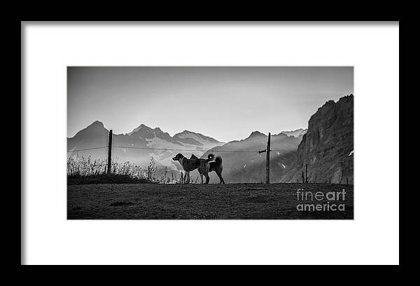 Herder Dogs; Landscape Framed Print featuring the photograph Watchful Eyes by Gemblue Photography