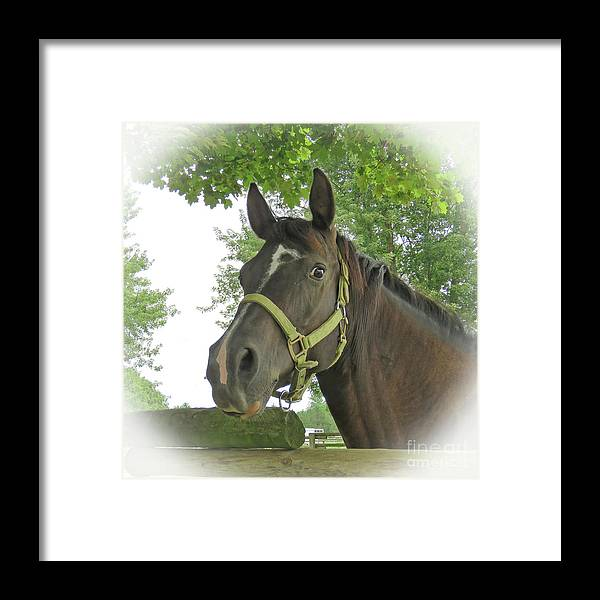 Horse Framed Print featuring the digital art Watchful Mare by Sharon Weiss