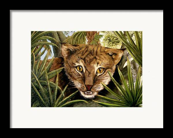 Bobcat Framed Print featuring the painting Watching Floridabobcat by Darlene Green