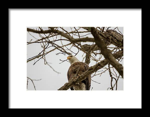 Eagle Framed Print featuring the photograph Watching Over River by Barbara Blanchard