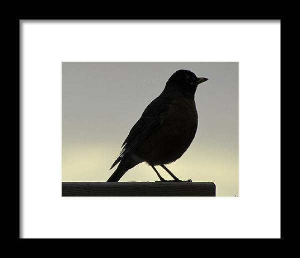 Bird Framed Print featuring the photograph Watching The Dawn by Luana Juknies