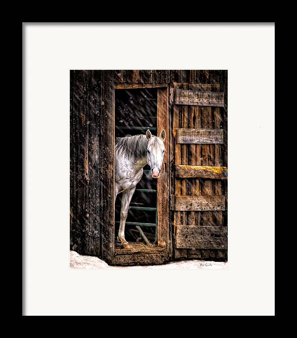 Horse Framed Print featuring the photograph Watching The Snow Fall by Bob Orsillo
