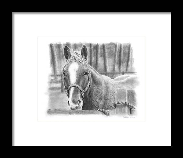 Horse Framed Print featuring the drawing Watching You by Douglas Kochanski