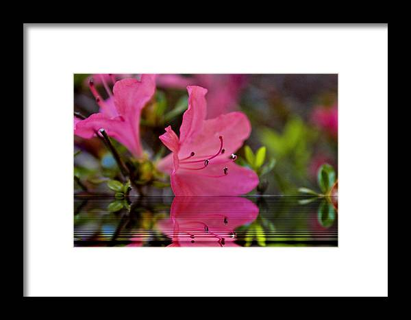 Water Framed Print featuring the digital art Water Azalea by Ches Black