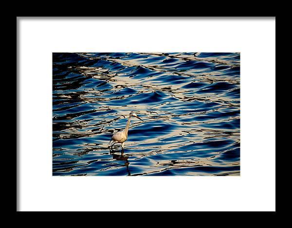 Water Bird Series Framed Print featuring the photograph Water Bird Series 11 by Stephen Poffenberger