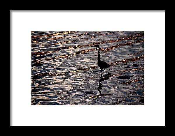Water Bird Series Framed Print featuring the photograph Water Bird Series 17 by Stephen Poffenberger