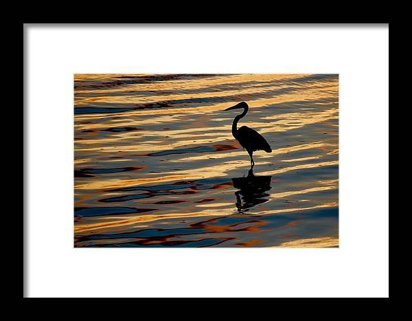 Water Bird Series Framed Print featuring the photograph Water Birds Series 3 by Stephen Poffenberger