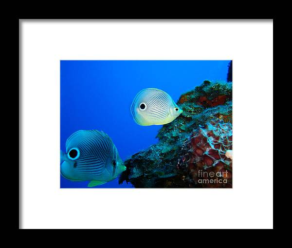 Underwater Framed Print featuring the photograph Water Butterflies by Dianne Cooper