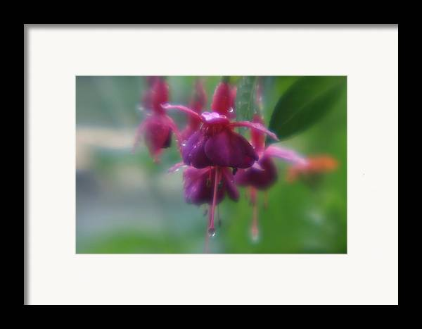 Framed Print featuring the photograph Water Drop Monets Garden by Jennifer McDuffie