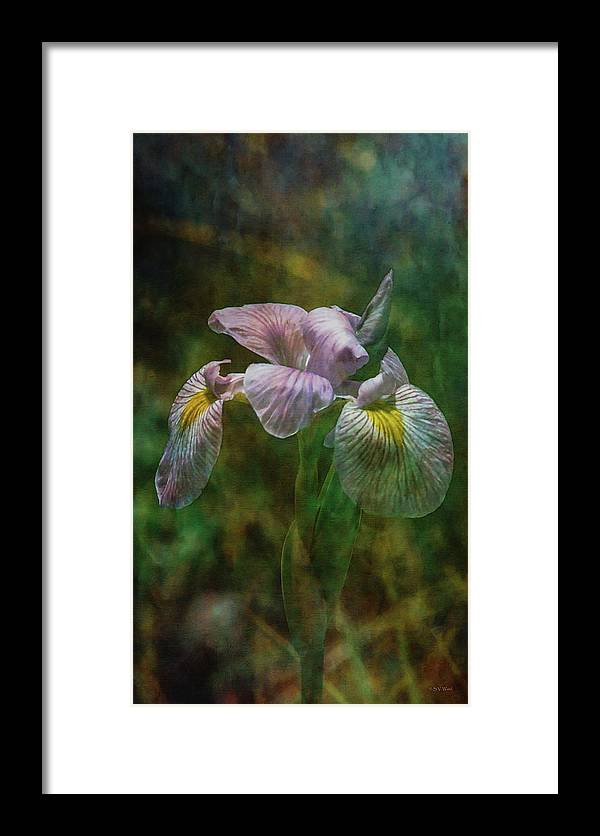 Impressionist Framed Print featuring the photograph Water Iris 1252 Idp_2 by Steven Ward