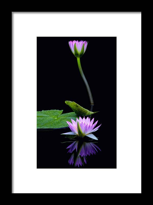 Water Framed Print featuring the photograph Water Lilies And Reflections by Margaret Barry