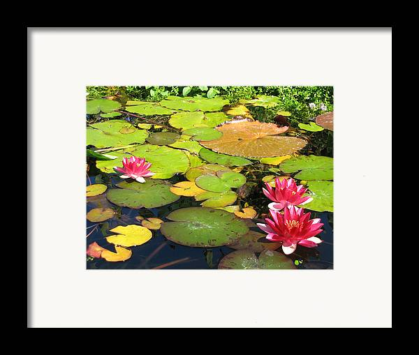 Travel Framed Print featuring the photograph Water Lilies At San Juan Capistrano by Beverlee Singer