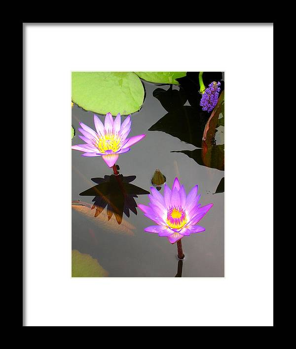 Water Lilies Framed Print featuring the photograph Water Lilies by Caroline Urbania Naeem