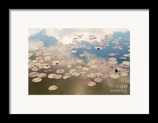 Nature Framed Print featuring the photograph Water Lilies In Schoenbrunn Vienna Austria by Julia Hiebaum