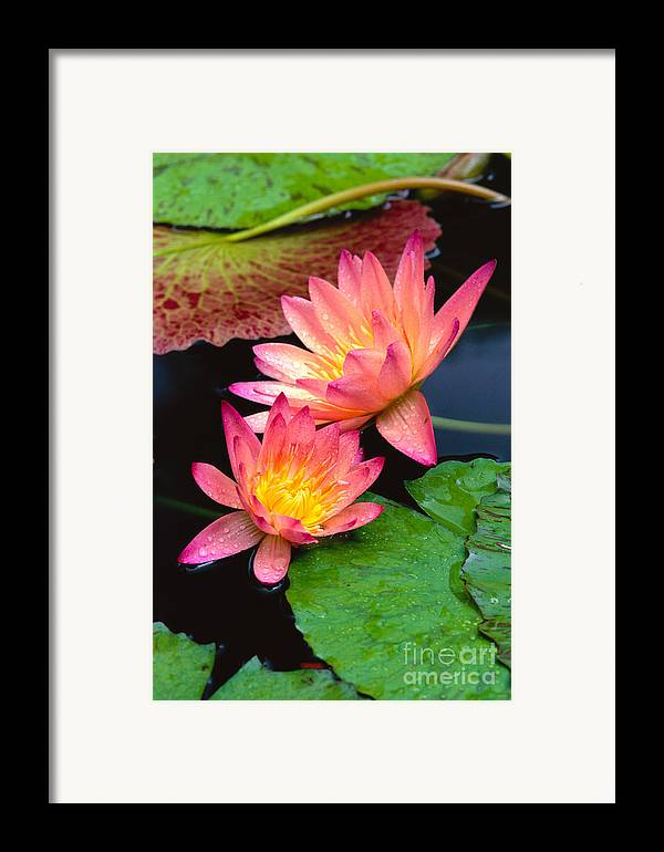 Bill Brennan Framed Print featuring the photograph Water Lily by Bill Brennan - Printscapes