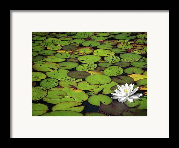 Green Framed Print featuring the photograph Water Lily by Elisabeth Van Eyken