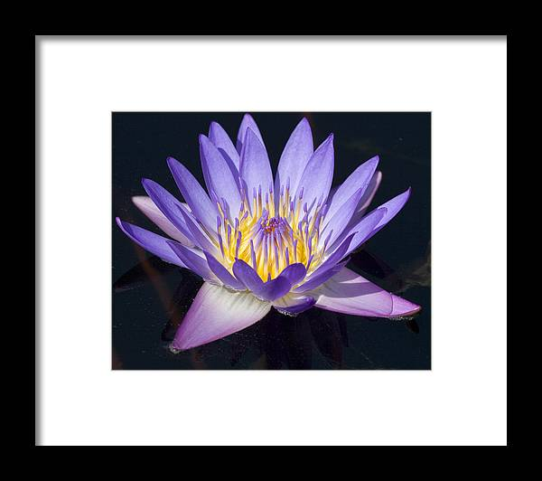 Flower Framed Print featuring the photograph Water Lily by Elvira Butler