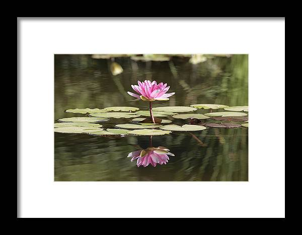 Lily Framed Print featuring the photograph Water Lily by Phil Crean